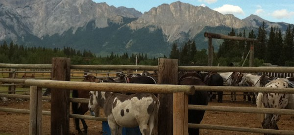Get out of town and play cowboy at the Rafter Six Ranch just outside Calgary