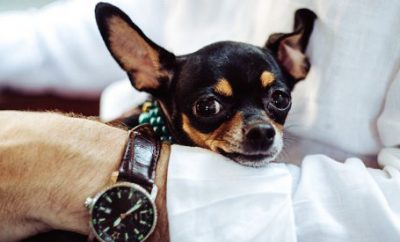 The Best of Dog Friendly Calgary